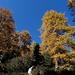 Knallige Herbstfarben.