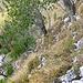 Abstieg Südschär: von Baum zu Baum getastet