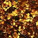 Schönes Blätterdach.