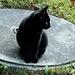 Huch, eine schwarze Katze.<br />Ein Glück, dass ich nicht abergläubisch bin. <br />Aberglaube bringt Unglück.