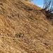 Wandern in steilen Grashängen