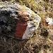 """beinahe """"Kunst am Wegrand"""": der von verschiedenen Flechten überzogene Stein mit der Markierung - zusammen mit der Silberdistel"""