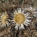 auch hier die typischen Herbstblumen