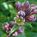schöne Blumen beim Aufstieg - wer kennt sie?
