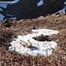 """Der Schneefleck gehört noch einmal ordentlich """"bewälzt"""" ;-)"""