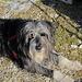 Simpatico cane in fase relax sulla cima del Madone!