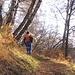 Il sentiero sale in un magnifico bosco di faggi.