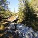 bereits in der Waldpassage tritt der Karst zu Tage; mal führt der Weg hindurch ...