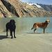 Badespaß im Hochgebirge ... Hund müßte man sein.