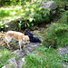 Wieder unten am Parkplatz - Shaddy und Finny nehmen ein erfrischendes Bad nach der Hitzeschlacht unterwegs