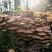 Geselliges Pilzleben am Waldboden
