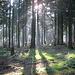 Waldidylle in den Hochlagen des Süntel