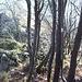 Passaggio tra gli alberi a.... misura di zaino