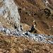 Das ist die fragliche Halde. <br />In Bildmitte der Gitziturm, auf der anderen Talseite der Weg Aeugsten - Rotärd.