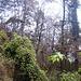 Durch urwaldähnliches Gelände führt der teils stark zugewachsene Pfad