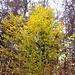 Frische Blätter im November