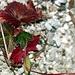 Nochmals schöne Herbstfarben