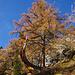 Lärchen im steilen Bergwald