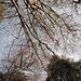 Erholung pur: in der Sonne liegen und in die Baumwipfel gucken.