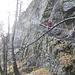 il sentiero di accesso alla Val Calnègia