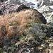 die Bodenflora zeigt sich im November mit warmen Farben...