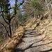 Waldweg kurz vor Pt. 792