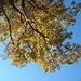 später Herbst auf Oberwald