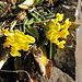 schon wieder Frühling (am 28. November)