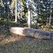 Fundort einer Silex-Messerklinge, Feuerstein. Alter 6000-8000 Jahre