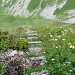 Zone herbeuse au milieu du parcours