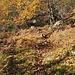 Abzweigung gleich nach dem kleinen Santuario oberhalb Lodrino: Rechts nach Pönn, geradeaus nach Gheneri