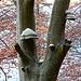 Baum voller Baumpilze