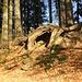... inklusive Höhle unter einem ehemaligen grossen Baum