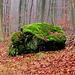 Feiner Moosblock mitten im weglosen Wald