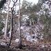 """Steil geht es durch Wald """"Beim Hahn"""" bergauf; die Fortsetzung des Steiges ist - wie hier - nicht immer gut erkennbar und deshalb etwas Findigkeit vonnöten."""