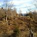 """Blick zurück vom """"Westgrat"""" zum Gipfel"""
