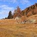 La baita superiore dell' Alpe Fopascia, da lì parte il sentiero che porta al passo dei laghetti, ed alla cresta che porta alla Croce di Sasso