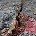 Farbenpracht Mauna Loa, Crack
