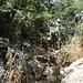 El Torcal de Antequera - Unterwegs auf der Ruta Amarilla. Dornen, Stacheln, Steine am und auf dem Weg ... für Abwechslung ist gesorgt.