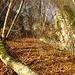 Typisches Unter-Fluhgelände: zuunterst mittelgrober Kalkschutt, darüber vermoderte Pflanzenreste, zuoberst viel trockenes Laub ... idealer Untergrund um KEINEN Halt zu finden ... auch die trockenen Stockausschläge und morschen Baumstämme sind keine wahre Hilfe ...