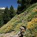 Im Aufstieg zwischen Puente Palo und Pico de Las Alegas - Wir haben einen Steinmann gefunden, der dazugehörige Pfadverlauf bleibt aber unklar.