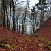 der graue Bereich ist die Abbruchkante im Überlinger See in ca 1m Tiefe, in der Nähe des bekannten Teufelstischs  [http://de.wikipedia.org/wiki/Teufelstisch_%28Bodensee%29 clic]