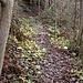 Waldweg, feucht und glatt. Die Steilheit kommt auf dem Foto nicht zur Geltung.