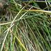 La commozione dei fili d'erba.