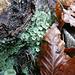 grüne Jahreszeitgenossen