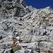 Am linken Ende des Schrofenfeldes über dem linken Teil des Bandes. Hier findet sich schöner stabiler Fels. Darüber hoch bis eine dunkle gelbliche Steilstufe den Weg versperrt. (T6/II)