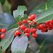 Rot-grün-weihnachtlich