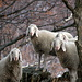 Auf dem Monte Brogna hat's auch andere Besucher