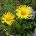 Blume - TL Kurs Gelmerhütte