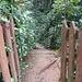 Eingang zum Regenwald